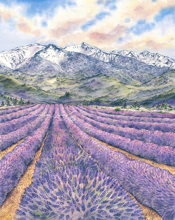 """""""All Rows Olympics"""" by Julie Senf  of lavender field"""