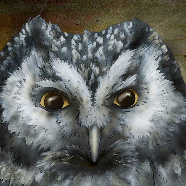 """Boreal Owl"" by Jeannine Chappell"