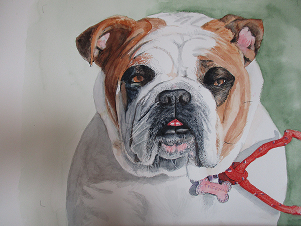 Bulldog painting by Beverly Beighle