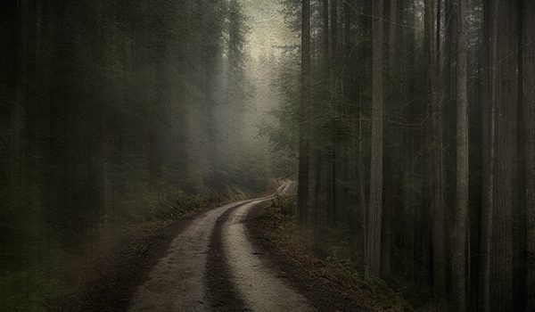 """Hymns to the Silence? by Phil Tauran photo of woods with a road through it"