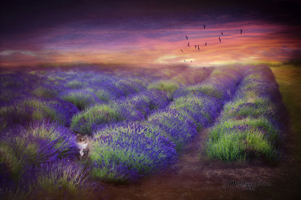 """Lavender Sunset"" by Marilynn Evans"