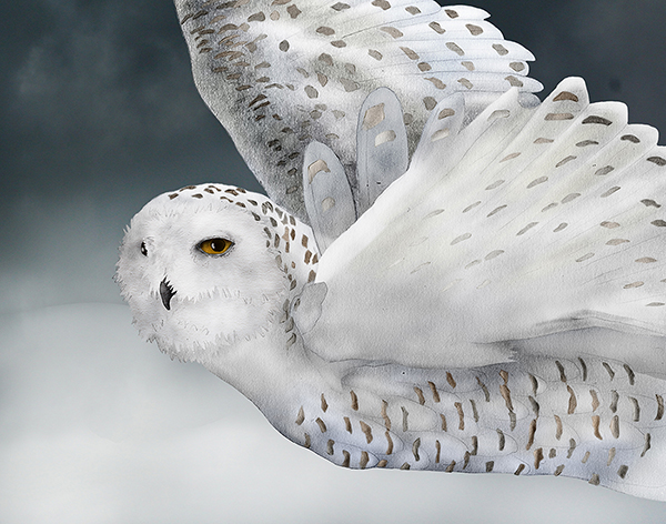 """Snowy Owl"" by Jeannine Chappell"