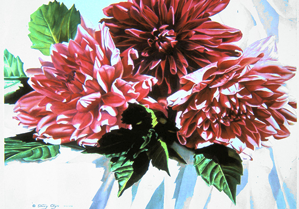 """Sunlit Dahlias"" by Sally Cays"
