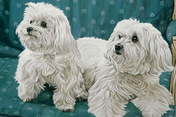 """Two Maltese"" by Sally Cays"