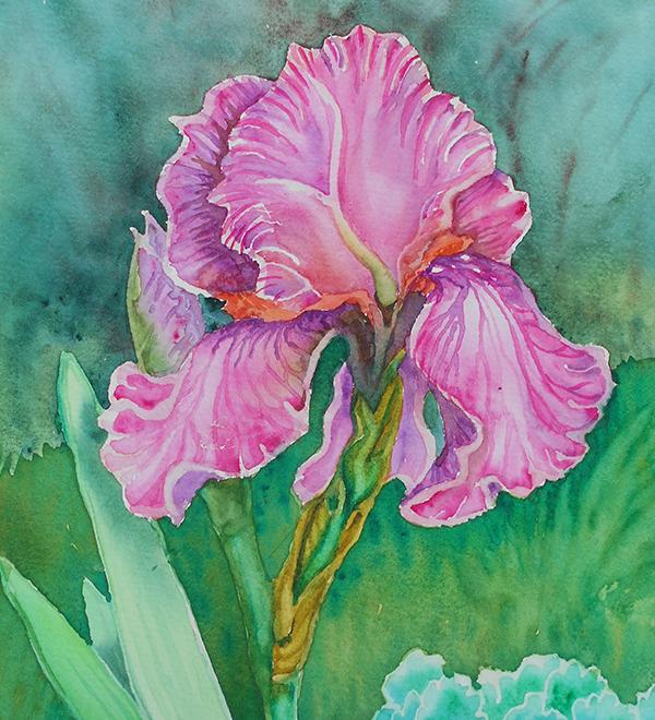 """Iris"" by Wendy Goldberg watercolor painting of a iris flower"