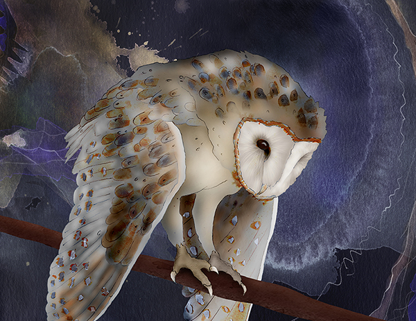 """Barn Owl"" by Jeannine Chappell"