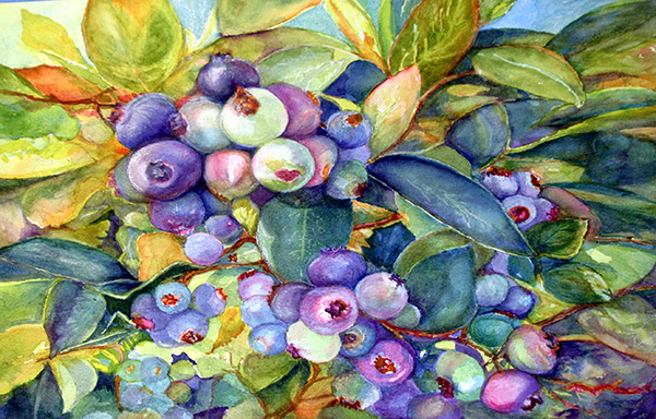 watercolor painting by Allyn Lawson of blueberries